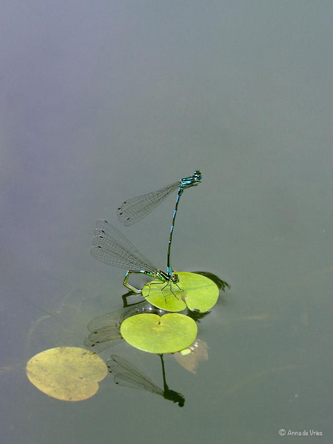 2. Variabele waterjuffer ei-afzetting