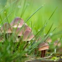 Het leven van paddenstoelen