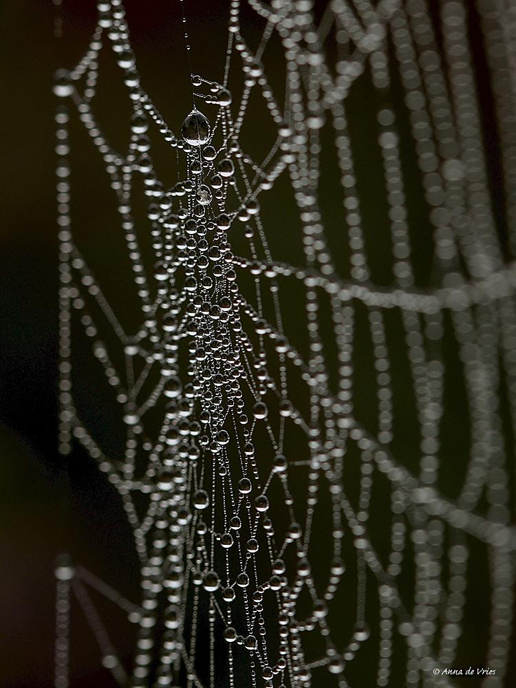 spinnenweb-kruisspin